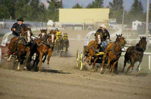 Course de Chuckwagon - Crédit Photo Travel Alberta