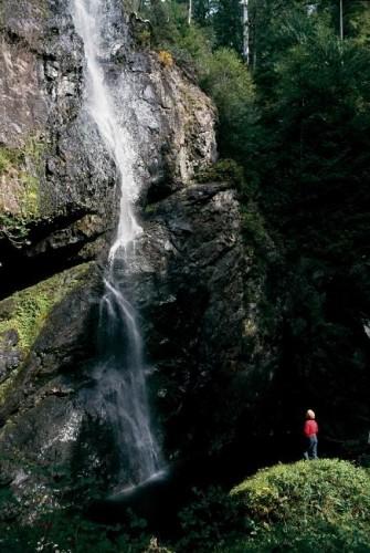 Carmanah Walbran Provincial Park - Credit Photo Tourism British Columbia