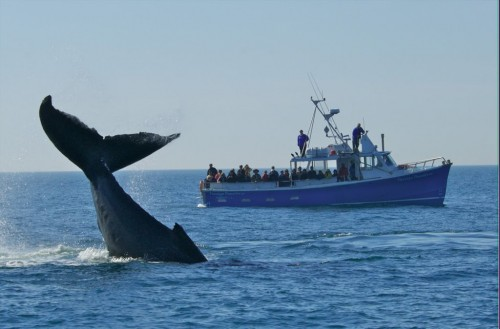 Whale watching tour off Digby Neck in southwestern Nova Scotia - Credit Photo Nova Scotia Tourism