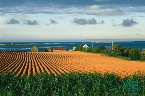 Champs pommes de terre - Credit Photo Tourism PEI - Jack LeClair