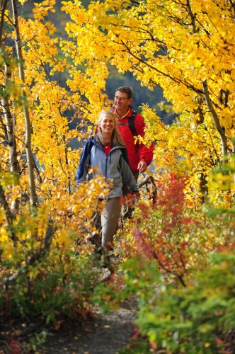 Automne - Credit Photo Government of Yukon - Derek Crowe